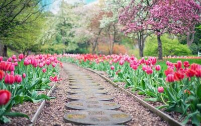 Le fioriture di tulipani più belle d'Italia.